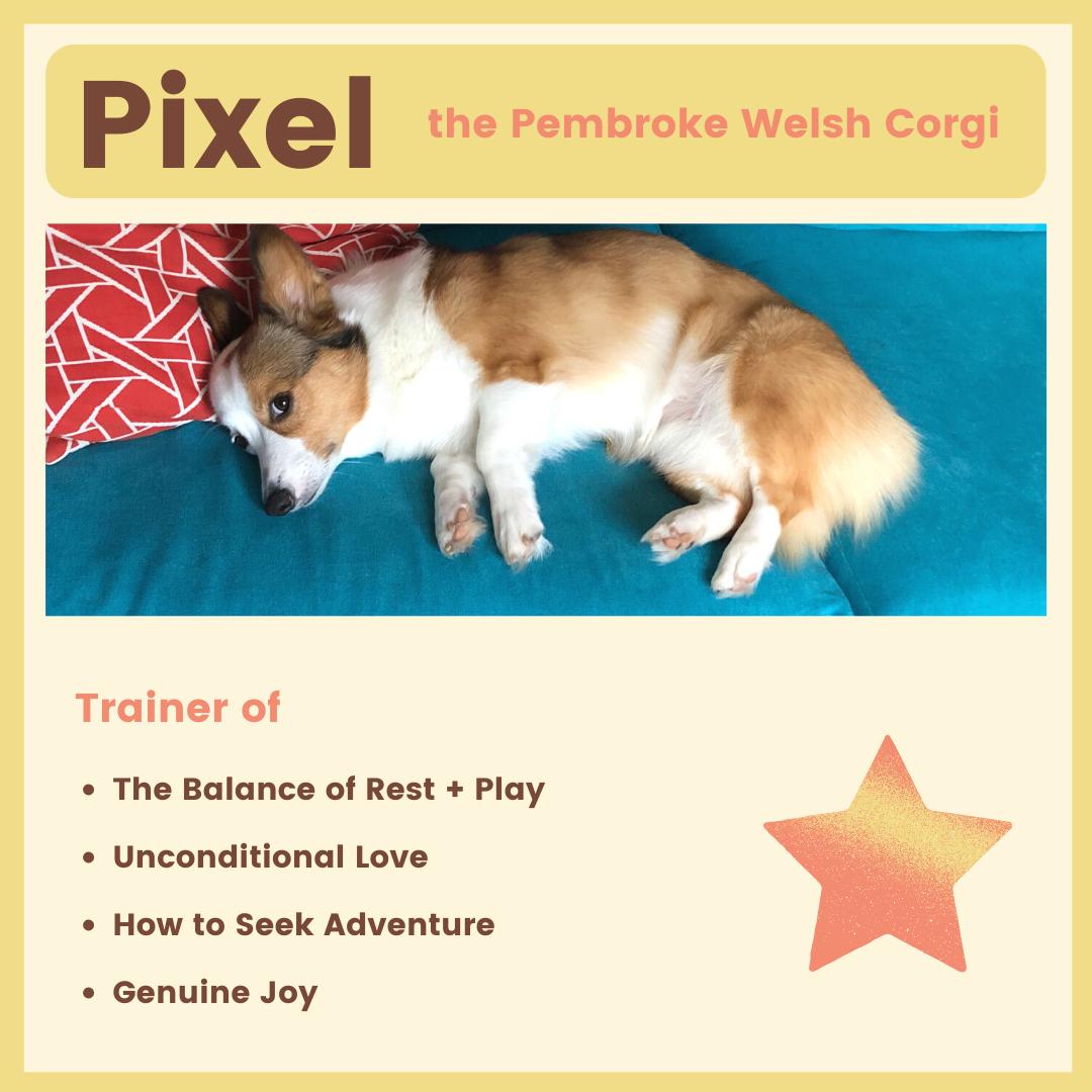 Pixel the Corgi