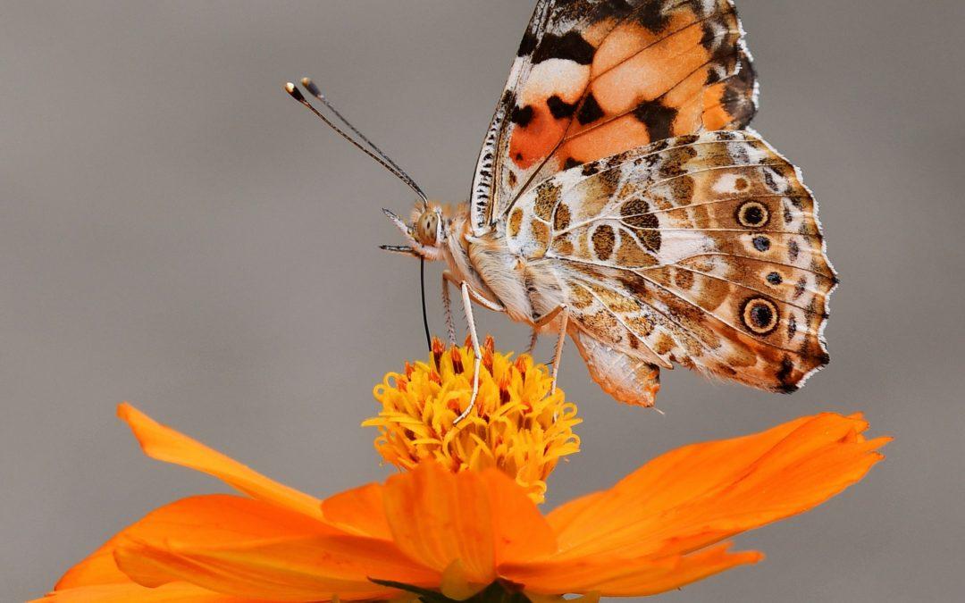 Reprocessing Phobias through Photography